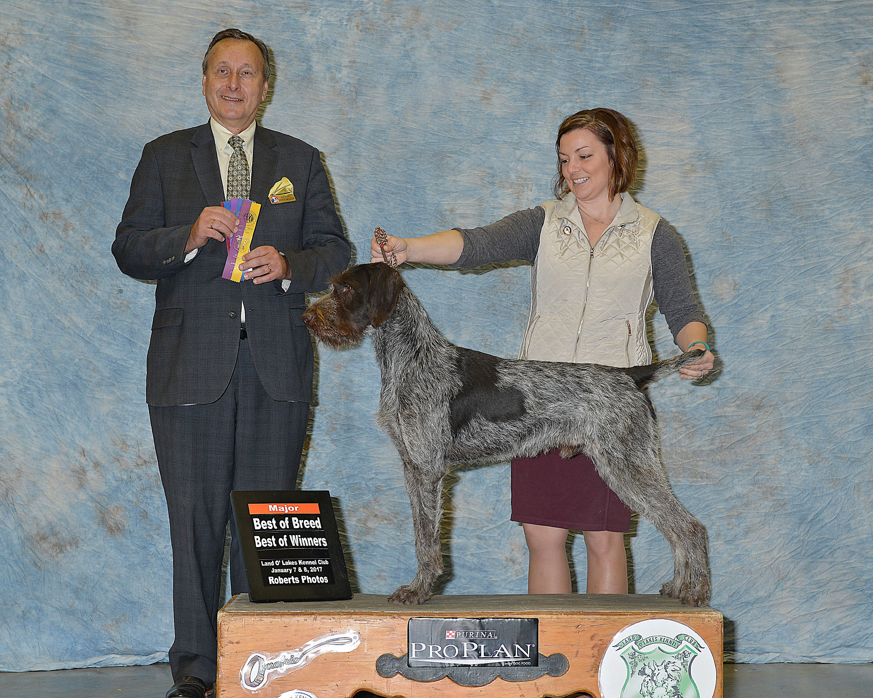 BestOfBreed | CLADDAGH German Wirehaired Pointers